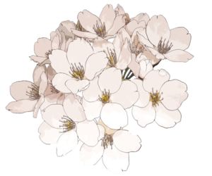 Flowers Overlay And Transpa Image