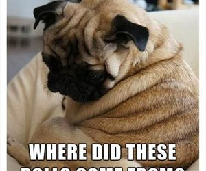 funny, dog, and rolls image