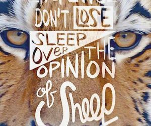 tiger, quote, and sheep image