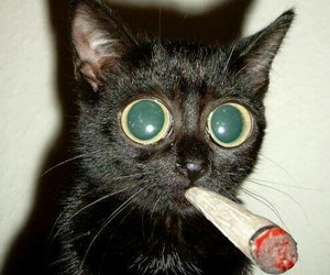 cat, weed, and drugs image