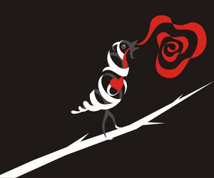 oscar wilde, rosa, and rose image