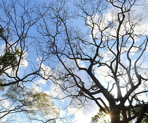 beautiful, branches, and nature image