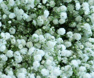 flower and baby s breath image