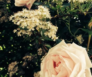 flowers, roses, and trees image