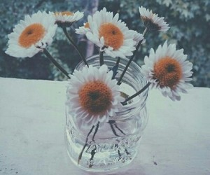 camomile, flowers, and white image