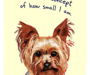 yorkie and tiny confessions image