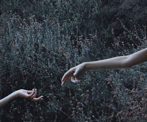 hands, nature, and flowers image