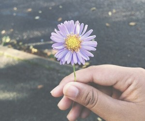 flowers, purple, and daisy image