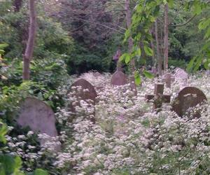 flowers, cemetery, and grunge image