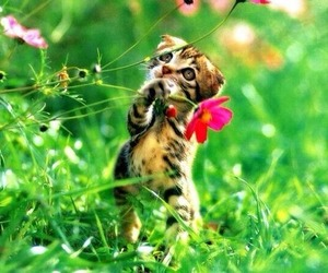 cat, flower, and kitty image