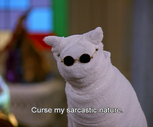 cat, sarcasm, and quotes image