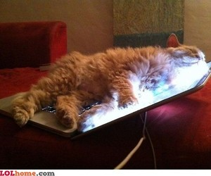 apple, cats, and funny image