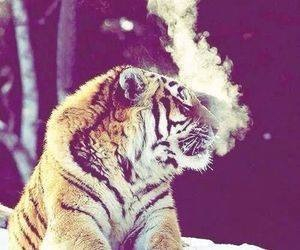 tiger, winter, and socute image