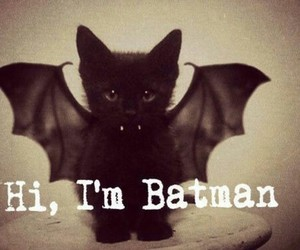 batman, cat, and cute image