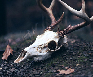 forest, skull, and horns image