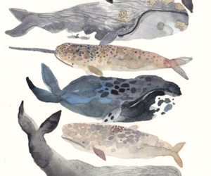 watercolor and whales image