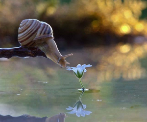 nature, snail, and flowers image