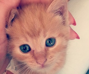 adore, cat, and blueeyes image
