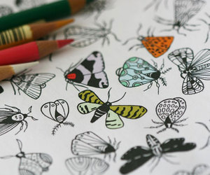 bugs, colors, and illustration image