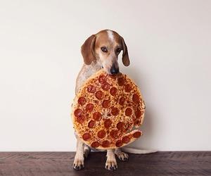 dog, pizza, and food image