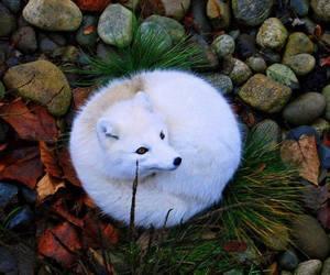 fox, animal, and white image