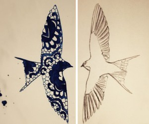 bird, fly, and swallow image