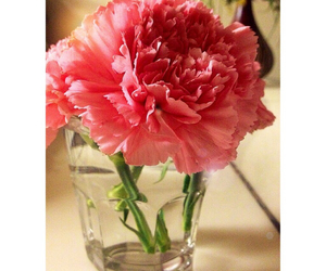 carnation, flower, and passion image