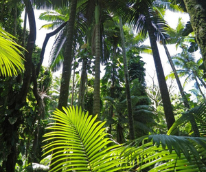 green, tropical, and summer image
