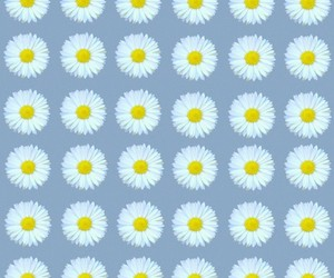 background, blue, and daises image