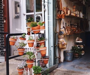 plants, potted plants, and succulents image