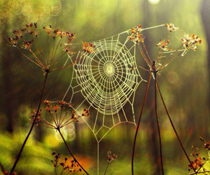 nature and spider image