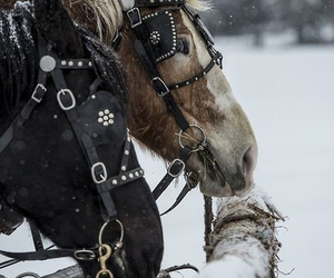 horse, winter, and animal image