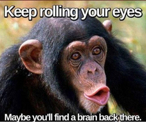 animals, fun, and funny image