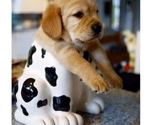puppy and doggie in a cup image
