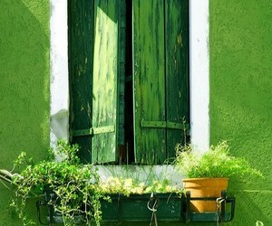 green, window, and plants image