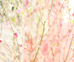 nature, pink, and prunus persica image