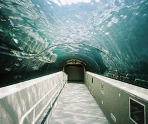 water, fish, and sea image