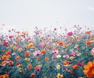 sky, wild, and flower image
