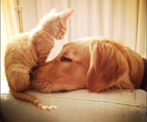 dog, cat, and cute image