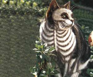 cat, skeleton, and Halloween image