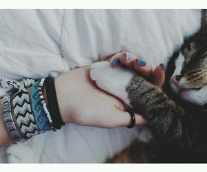 cats, cute, and friends image
