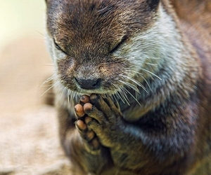 animal, otter, and pray image