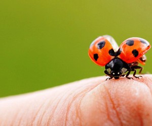 cute, ladybug, and ladybird image