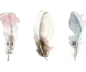 feathers, water color, and illustrations image