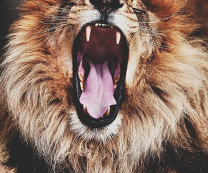lion, rawr, and roar image