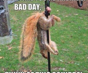 funny, squirrel, and bad day image