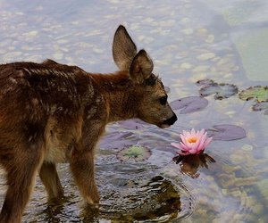 animal, deer, and flowers image