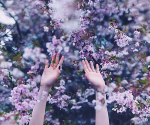 flowers, purple, and hands image