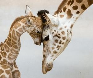 giraffe, animal, and baby image