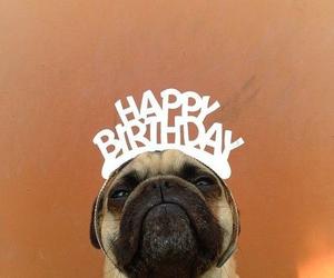 dog, happy birthday, and birthday image